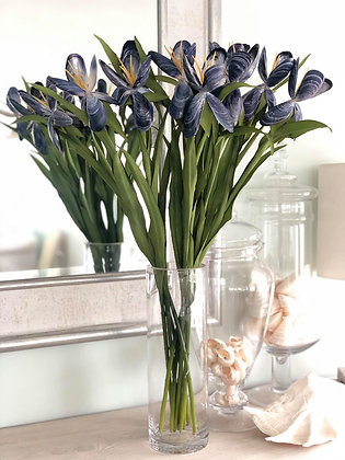 The Seashell Iris