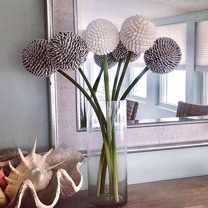 Seashell Allium Large