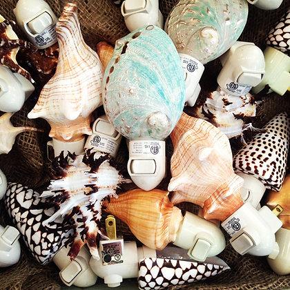 Natural Seashell Nightlights