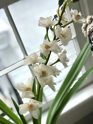 The Fish Scale Orchid Arrangement