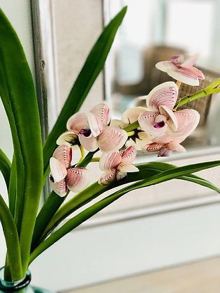 The Seashell Orchid Arrangement