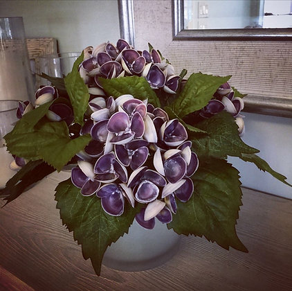 The Violet Seashell Hydrangea