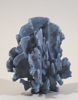 Blue Ridge Coral