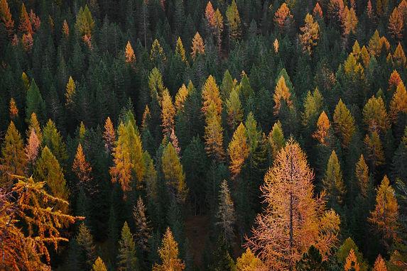 Colours for Autumn