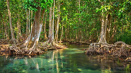 Hablemos de manglares...
