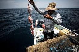 ¡ Nueva ley de pesca para Panamá!