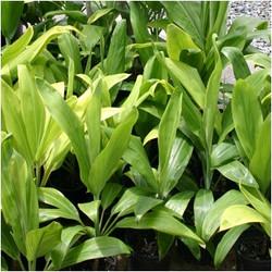 organikbe plant 11.jpg