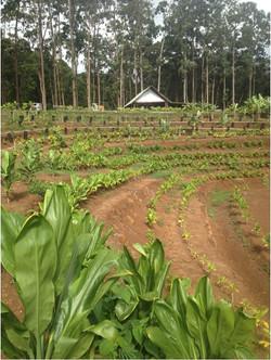 organikbe plant4.jpg