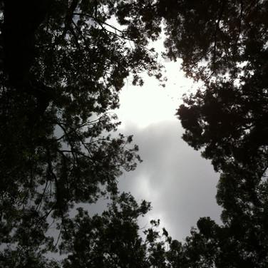 ヴァヒパナの上しか空が見えないほどここは森の中!