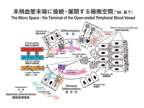 末梢血液空間理論図.jpg