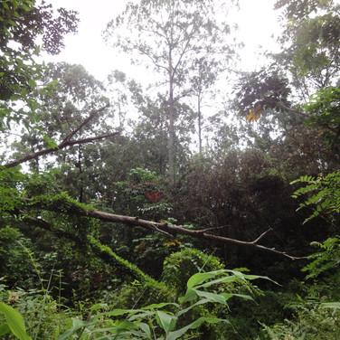 欝蒼と繁ったトリピカルジャングルがジェナを待ち受けた