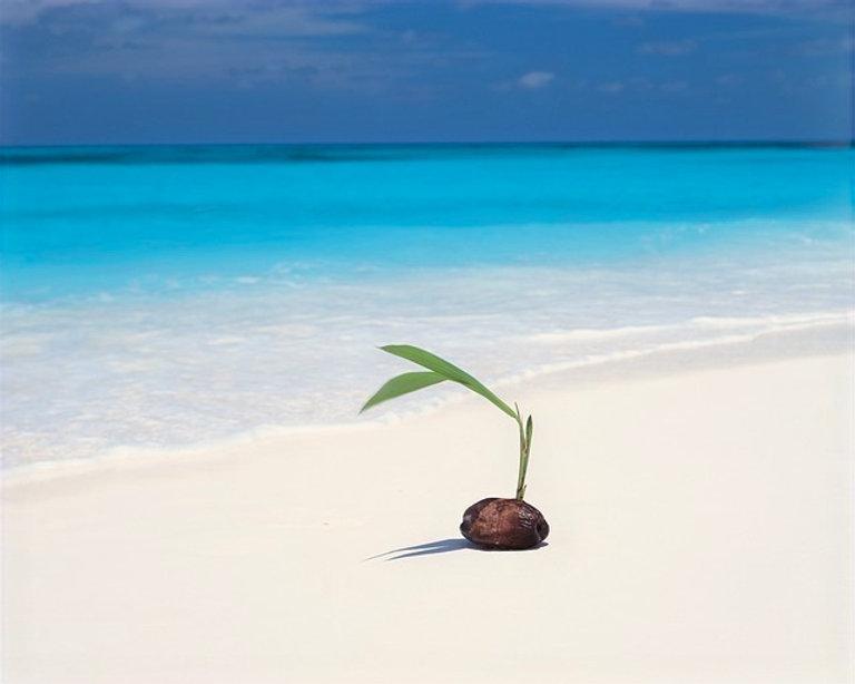 beach-1868021_640_edited.jpg