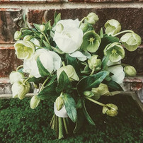 Ranunculus and hellebores--perfect combi