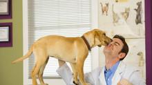 Ветеринарная лечебница начинает работать