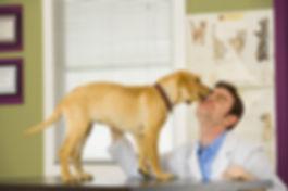 Veterinary pet cannabis (CBD - hemp extract) education is vital for a pet's health.