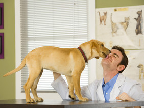 Emergency Preparation for your Dog