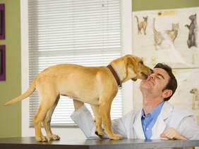 DOG THANKSGIVING SAFETY TIPS