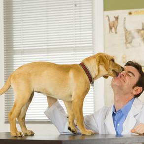 רפואה משלימה לבעלי חיים מהי? דיקור סיני מהו?