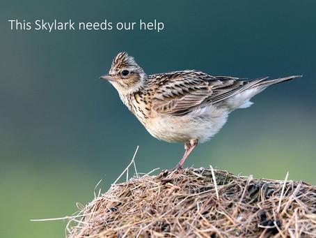 Skylarks need our help!