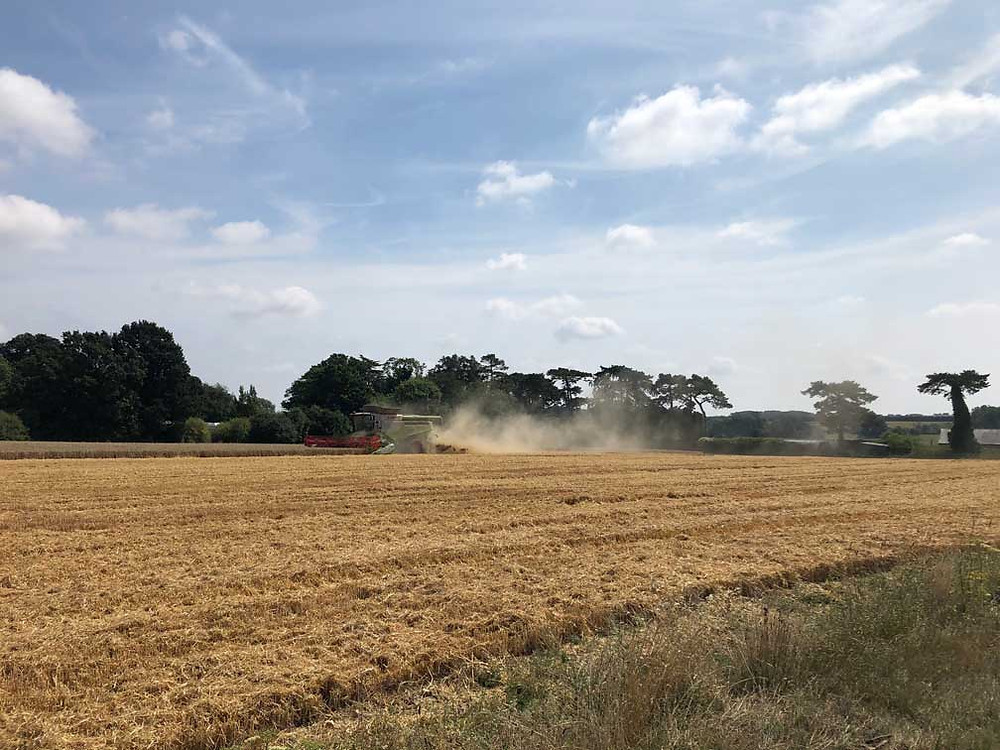 Combining wheat at Woolton Farm