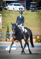 Dressage at the Young Event Horse Championships