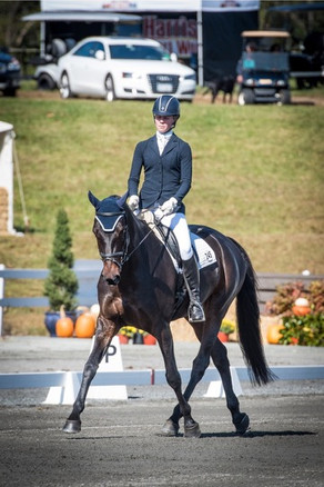 Curly Sue at the 2015 Young Event Horse Championships