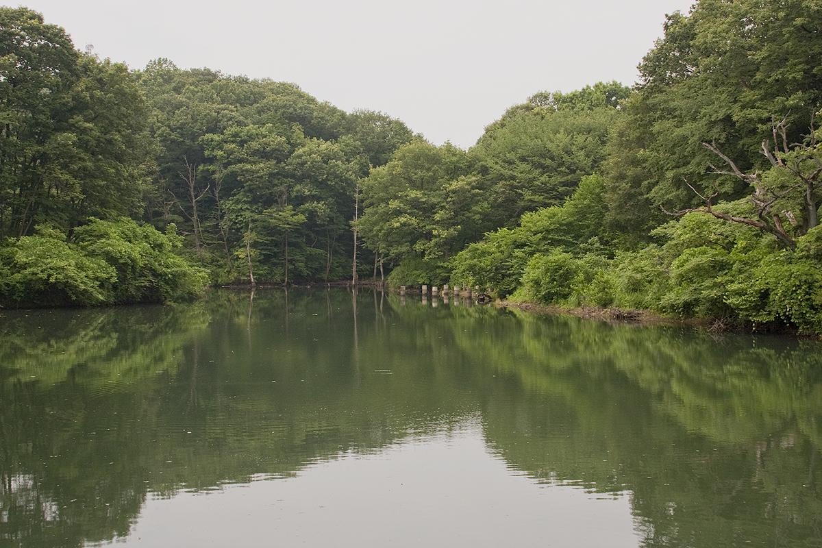 7月深緑の築池