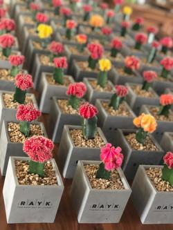 מתנות לחגים עציצי בטון ממותגים מתנה לראש השנה דיזיין פטרנס קקטוסים וסוקולנטים צבעוניים מתנה לחג