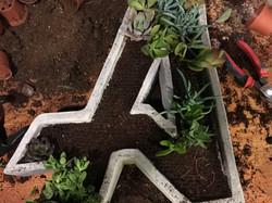 תהליך שתילת צמחים בעציץ בטון