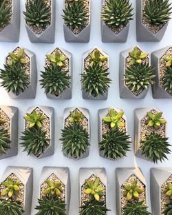 מתנות לחגים עציצי בטון גיאומטריים ממותגים מתנה לראש השנה דיזיין פטרנס קקטוסים וסוקולנטים מתנה לחג