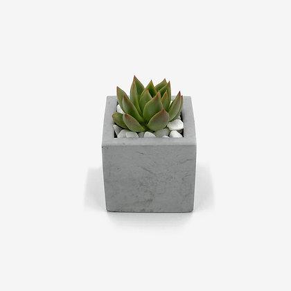 עציץ בטון מרובע, עציץ בטון, צמח עמיד, צמח אויר, צמח, קקטוס, עיצוב פנים