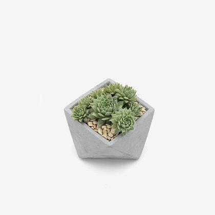 עציץ בטון משושה עם צמח סקולנט קקטוס לעיצוב חדר השינה