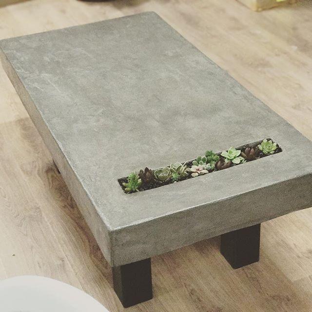 שולחן בטון עם צמחים - עיצוב משרד