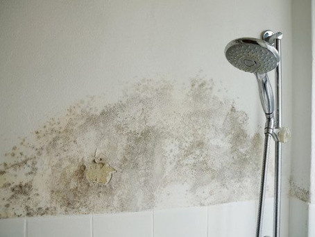 Five Facts About Mold You Should Know