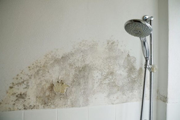 mold in bathroom.jpg