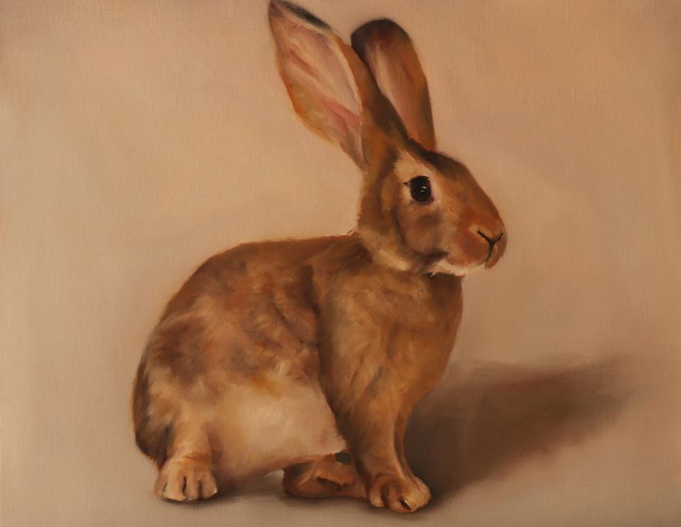 Rabbit, 2019