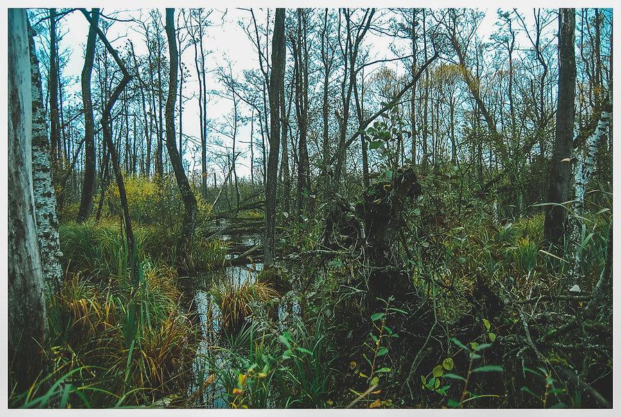 Sumpfgebiet_im_Naturschutzgebiet_Kuhlrad