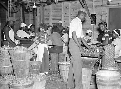 migrants-many-beans-canning-plant-Florid