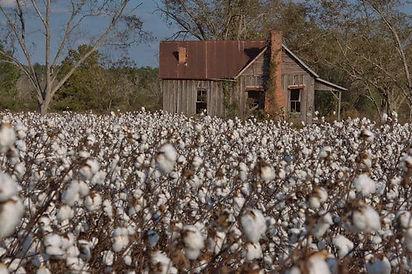 owensboro-ga-brown-farm-tenant-house-pho