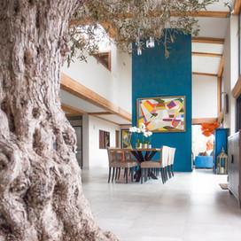 Brookfield Olive Tree.jpg
