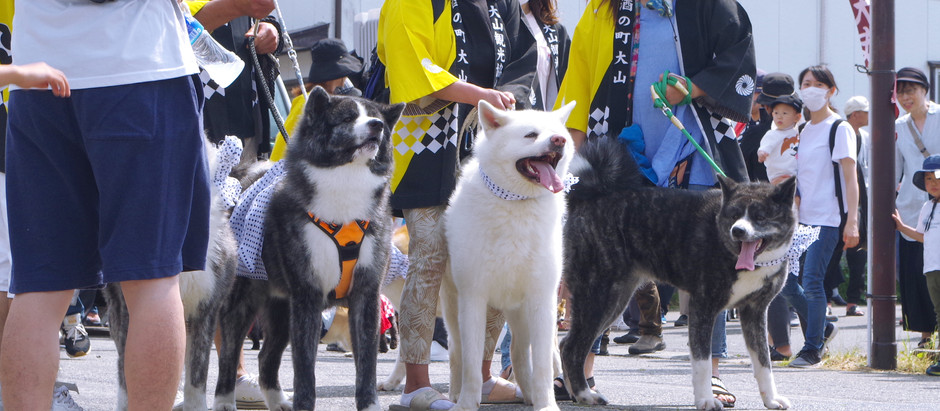 Oyama Dog Festival: A 300 years old tradition