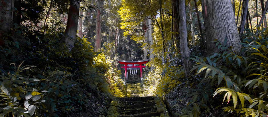 "Shinrinyoku: ""Forest bathing"" in Tsuruoka"