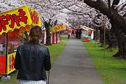 Tsuruoka Park's Cherry Blossom Festival