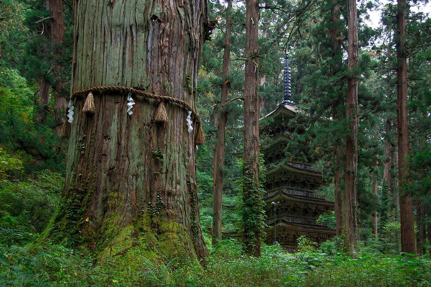 Mt. Haguro's pagoda