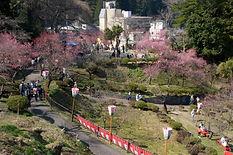 Yutagawa's plum park