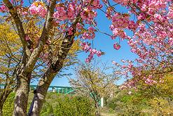 Kuwadai Sakura Park