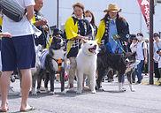Le festival des chiens d'Ōyama