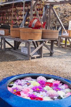 Shonai Jinja's omikuji spot