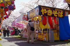 2019 Cherry-blossoms festival