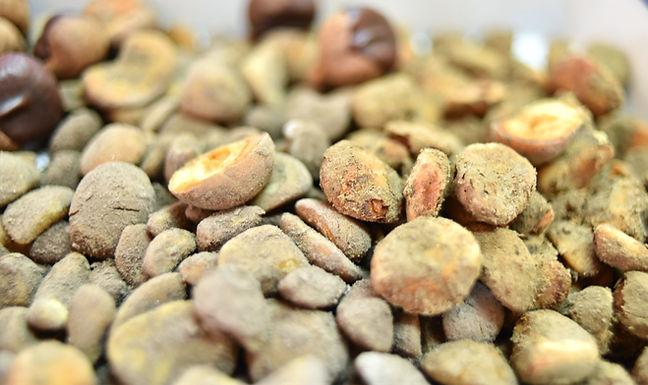 Japanese Chestnut